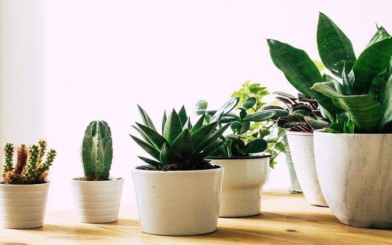 pot for indoor vegetable garden