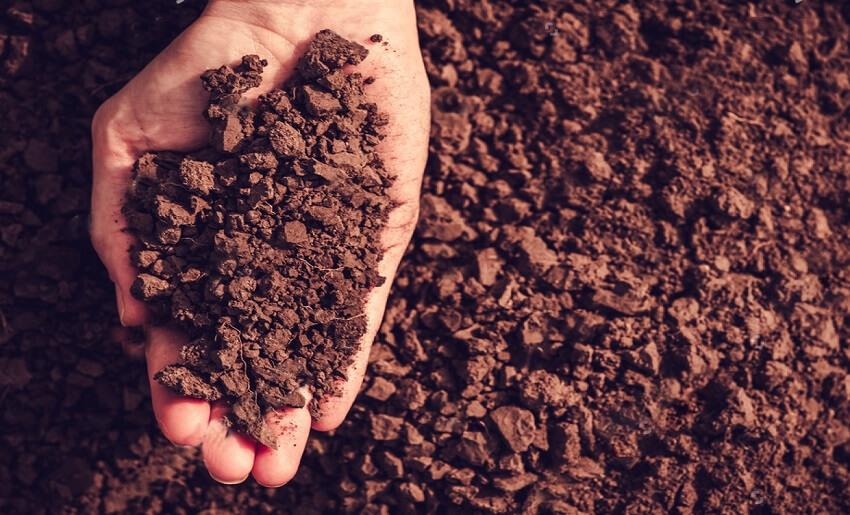 preparing soil for planting vegetables
