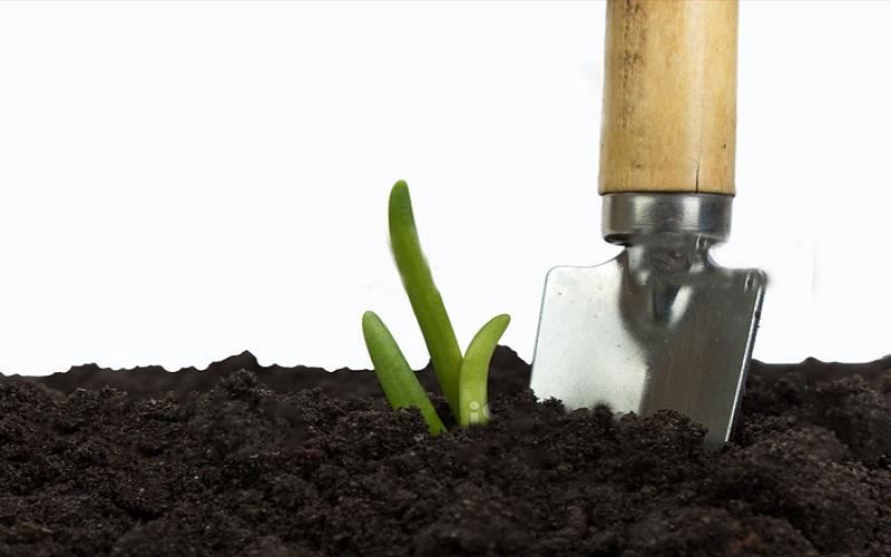 soil amendment for vegetable garden
