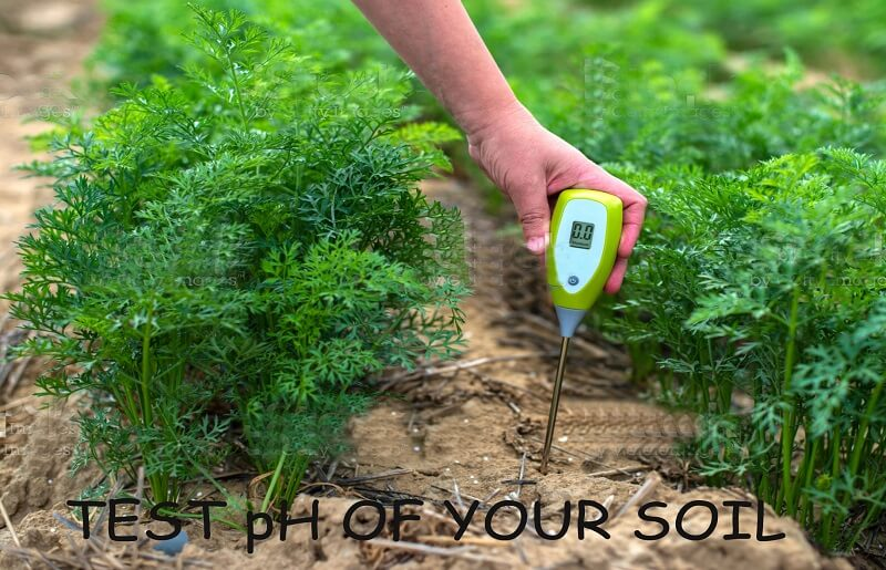 test pH of your soil